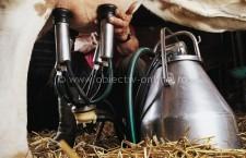 Începând din 1 aprilie, trebuie depuse declaraţiile anuale privind livrările, respectiv vânzările directe de lapte, efectuate în anul de cotă 2013/2014