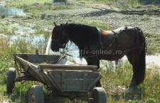 Olteniţa / Hoţi de cai, reţinuţi de poliţişti