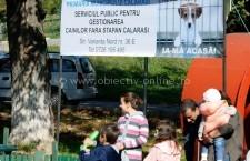 Peste 150 de vizitatori la primul Târg de adopţie pentru câini