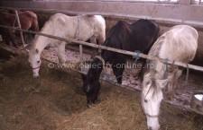 Oltenița/Acțiune pentru verificarea operațiunilor comerciale cu produse animale