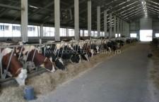 Sprijin financiar pentru fermierii din sectorul zootehnic aprobat de Guvern