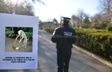 Călărași/Amenzi pentru cei care nu strâng în urma câinilor de companie