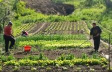 Camera Agricolă Călăraşi/Acţiune de informare pentru producătorii agricoli