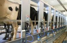 În perioada 1 aprilie  – 14 mai 2015 se depun declaraţiile anuale privind livrările, respectiv vânzările directe de lapte
