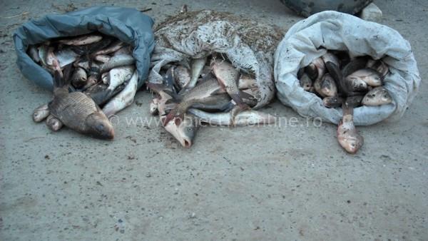 Acţiune a poliţiştilor, pentru combaterea activităţilor ilicite de comerţ cu peşte