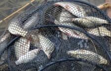 Peşte, confiscat de poliţişti/Cel care-l comercializa este cercetat