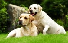 Primăria Călărași/Toți câinii cu stăpân vor fi microcipați gratuit
