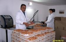 SC Agro Prest 2005 SRL produce peste 25.000 de ouă în fiecare zi