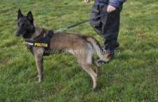 Guvernul Statelor Unite ale Americii va dona Jandarmeriei Române patru câini specializați în detectarea explozibililor