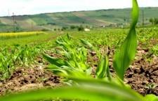 30.404 fermieri autorizați la plata pe suprafață, în urma controalelor pe teren