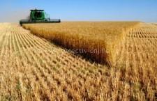 Peste 110 milioane de euro, sprijin financiar pentru sectorul vegetal