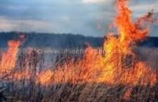 40 de hectare de miriște au ars în localitatea Sărulești