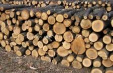 Direcția Silvică/Anunț privind organizarea licitației de vânzare a masei lemnoase fasonate