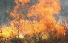 Oltenița/Incendiu de vegetație uscată pe malul Dunării, provocat de o persoană necunoscută
