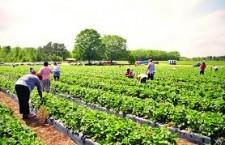 Selecție pentru 800 de locuri de muncă în agricultură – Spania