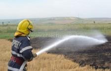 100 de hectare în flăcări la Sărulești, în apropiere de autostradă