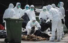 Recomandări ale DSP Călărași privind gripa aviară