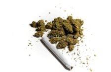 Oltenița/Arestați preventiv pentru trafic de droguri