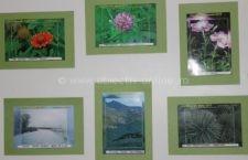 Vernisaj Eco Fotografia/Expoziția poate fi vizitată până pe 29 septembrie