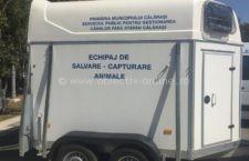 SPGCFS Călărași/Linie telefonică specială pentru semnalarea animalelor agresive sau care au nevoie de ajutor precum și a cadavrelor de pe străzi