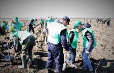 Peste 23.000 de voluntari la acțiunile de împădurire derulate de ROMSILVA