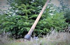 Tăierile ilegale, în scădere puternică în pădurile de stat administrate de Romsilva