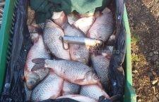 Doi bărbați din Mânăstirea s-au ales cu dosar penal pentru comercializarea de pește fără documente de proveniență