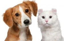 Regulament privind circulaţia și deţinerea animalelor pe raza municipiului Călăraşi