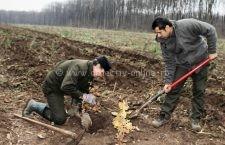 Pe nu mai puţin de 132 de ha se vor planta copaci, în judeţul Călăraşi , în cea de a doua campanie de împăduriri din acest an a Romsilva