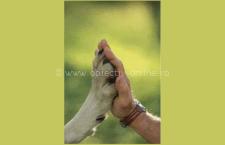 Acord între Serviciul Public Pentru Gestionarea Câinilor Fără Stăpân şi o fundaţie din Marea Britanie